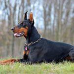 Choisir son chien de garde : nos conseils