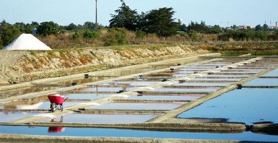 Les marais salants de Saint Hilaire en Riez