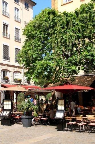 Lyon Montplaisir