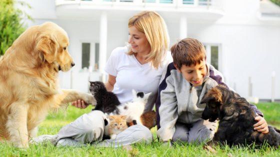 Montrer comment s'occuper d'un animal de compagnie